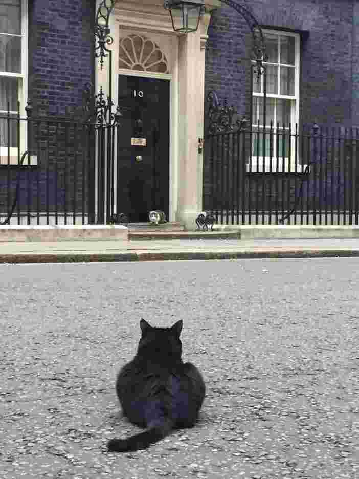 Il Gatto Larry Un Bullo A Downing Street Video Su Il Mio Mondo Blog