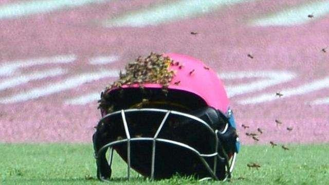 Sudafrica, sciame di api invade il campo di cricket! I giocatori si buttano a terra. (Video)