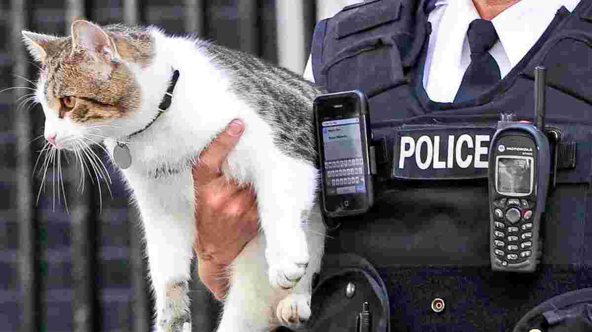 Il Gatto Larry Un Bullo A Downing Street Video